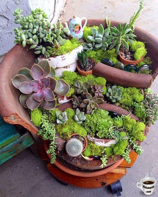 cool-broken-pot-plants-cacti