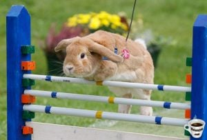 bunny-competition-start-race