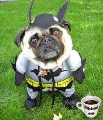 funny-dog-costumes (1)