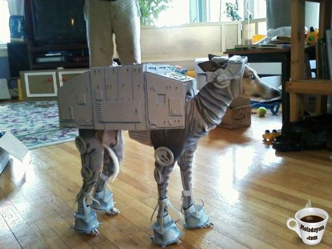 funny-dog-costumes (10)