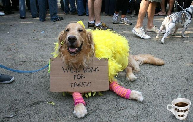 funny-dog-costumes (11)