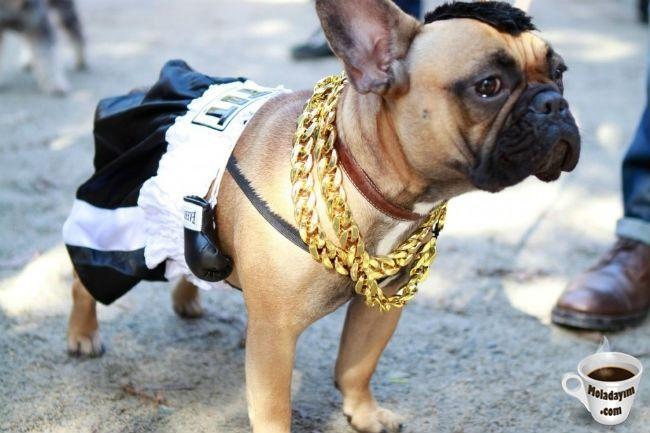 funny-dog-costumes (12)