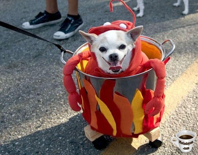 funny-dog-costumes (13)