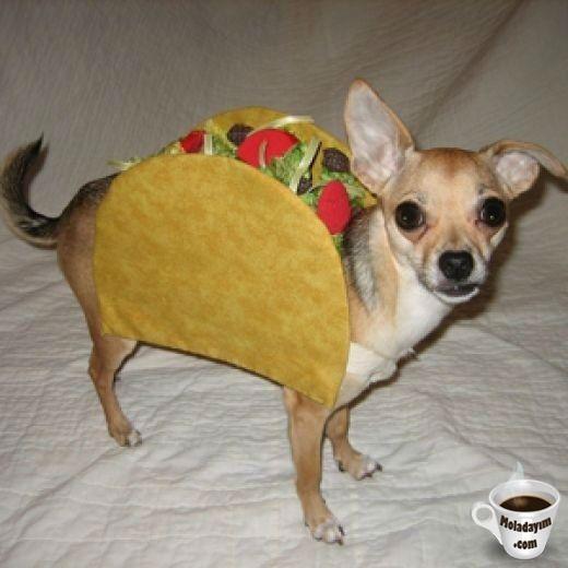 funny-dog-costumes (14)