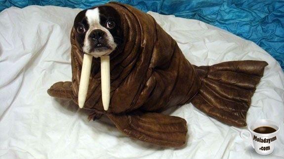 funny-dog-costumes (15)