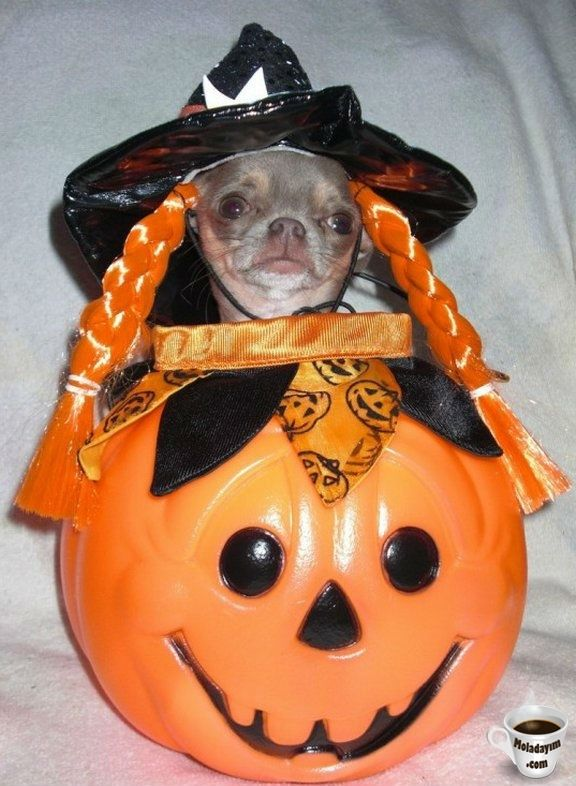 funny-dog-costumes (17)