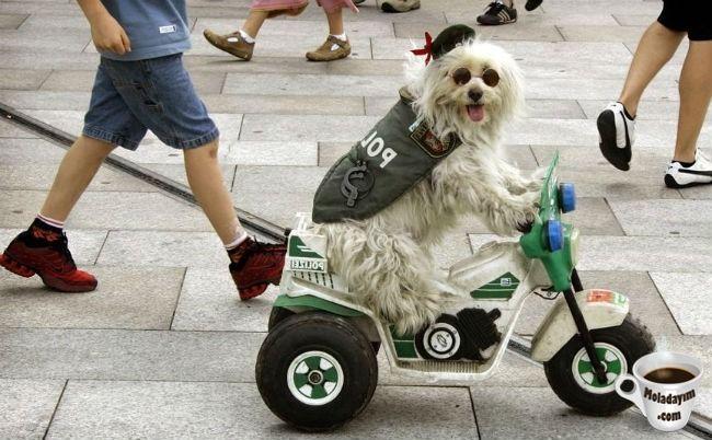 funny-dog-costumes (18)
