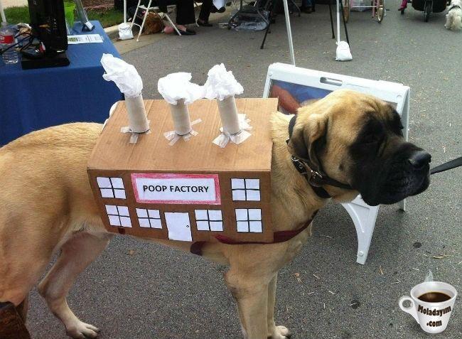 funny-dog-costumes (19)