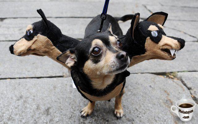 funny-dog-costumes (2)