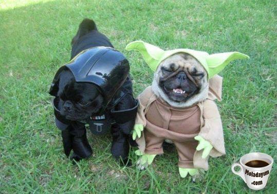 funny-dog-costumes (20)