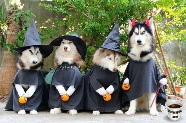 funny-dog-costumes (21)