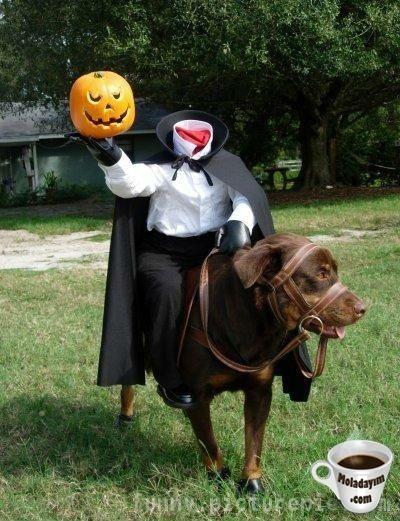 funny-dog-costumes (3)