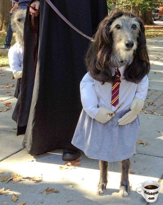 funny-dog-costumes (4)