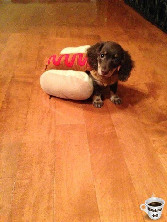 funny-dog-costumes (5)
