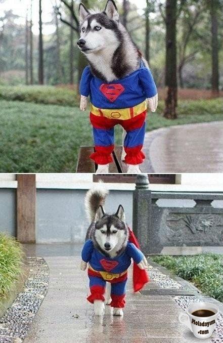 funny-dog-costumes (6)