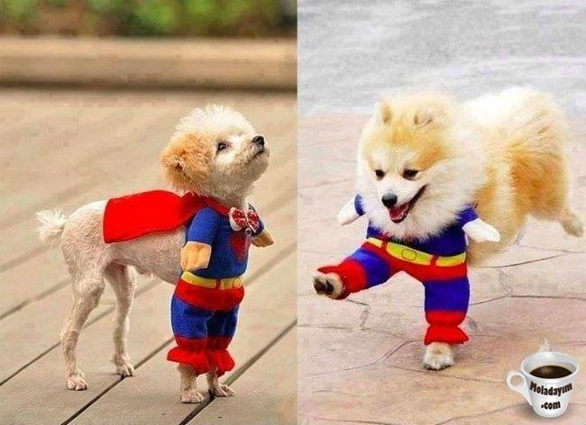 funny-dog-costumes (8)