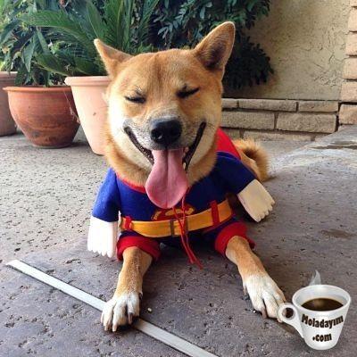 funny-dog-costumes (9)