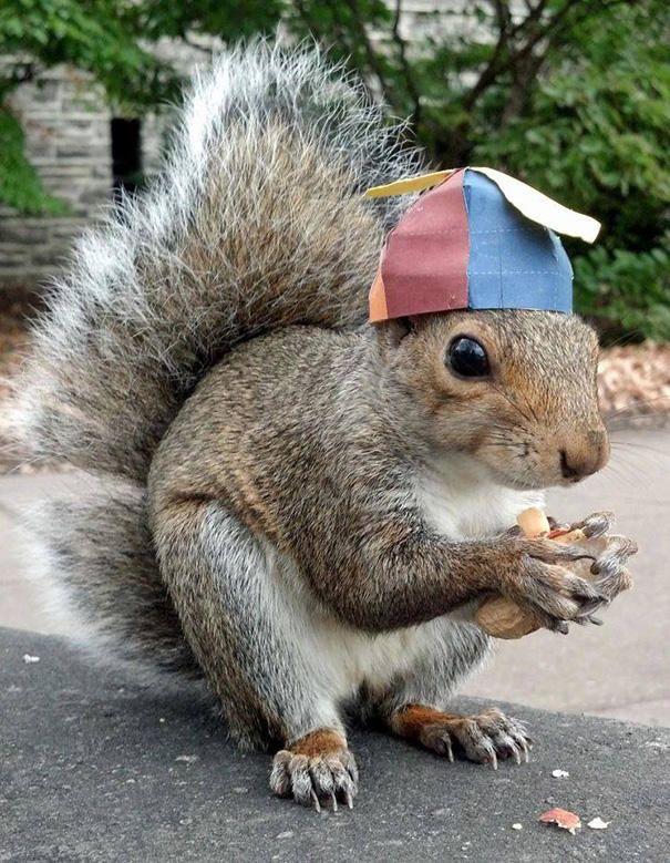 merakli-sincap-defile-squirrel-hayvan-animal (1)
