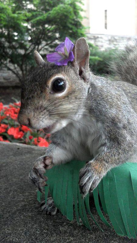 merakli-sincap-defile-squirrel-hayvan-animal (10)