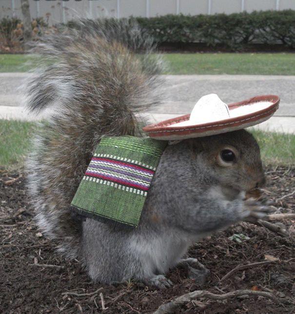 merakli-sincap-defile-squirrel-hayvan-animal (4)