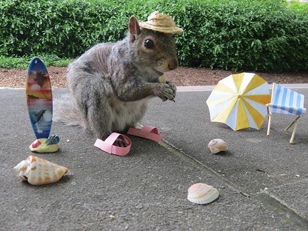 merakli-sincap-defile-squirrel-hayvan-animal (6)