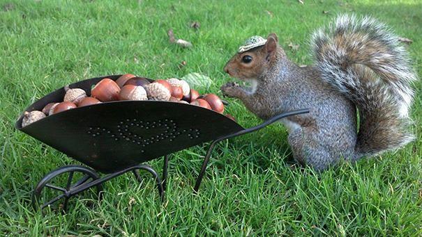merakli-sincap-defile-squirrel-hayvan-animal (7)