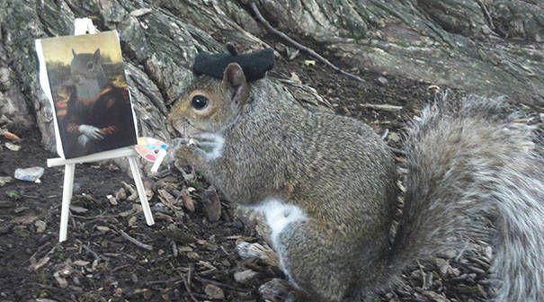 merakli-sincap-defile-squirrel-hayvan-animal (8)