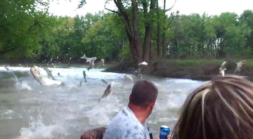 zıplayan balıklar